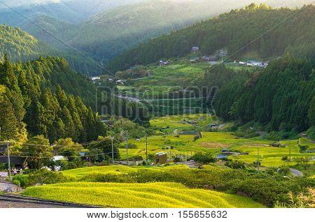 Rice Paddy Terraces On Sunset. Yotsuya, Aichi Prefecture, Japan