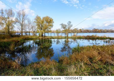 Autumn Trees  Close To The Dnieper River