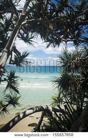 Pandanus Trees frame a beautiful Gold Coast beach - Coolangatta to Surfers Paradise