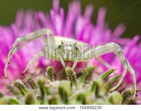 Large predatory spider close up on a bright flower