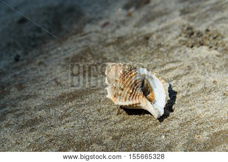 Shell With Hermit Crab On Sand