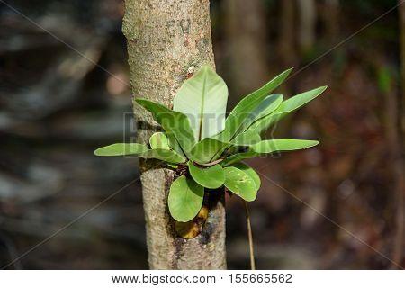 Plant On The Tree Bark