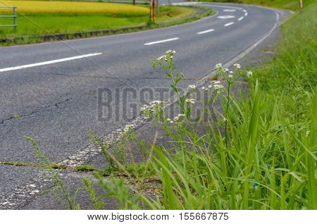 Rural road kerb view with wild flowers on foreground. Selective focus on flowers