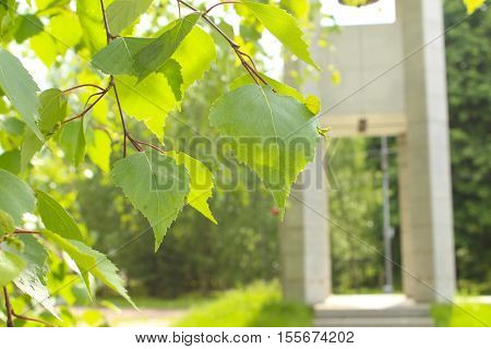 The leaves of birch on a background of the chapel, erected in memory of Spanish volunteers. Poklonnaya Hill. Moscow