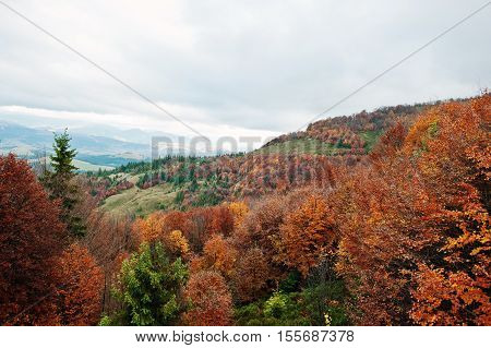 Beautiful Orange, Green And Red Autumn Forest. Autumn Forest, Many Trees In The Orange Hills At Carp