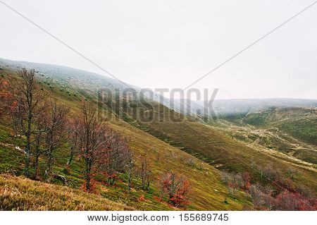 Scenic View Of Mountain Autumn Red And Orange Forests Snow-covered Mountain Top Covering By Fog At C
