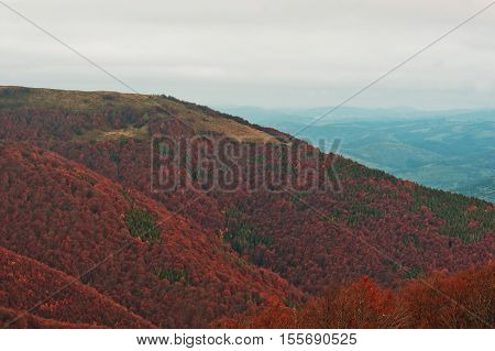 Colorful Red Autumn Landscape In The Mountain. Foggy Morning In The Carpathian Mountains At Pylypets