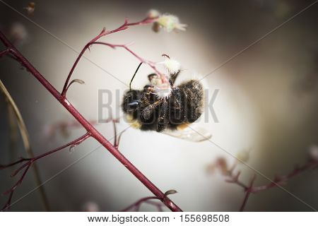 a bumble bee hanging upside down in a red twig
