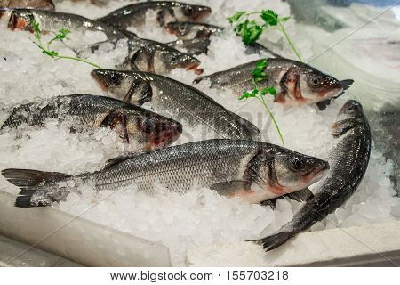 Fresh European seabass or Dicentrarchus labrax, lavpaki on ice in the greek fish shop lined up for sale refreshed parsley. European seabass on ice in fish shop. Horizontal. Daylight.
