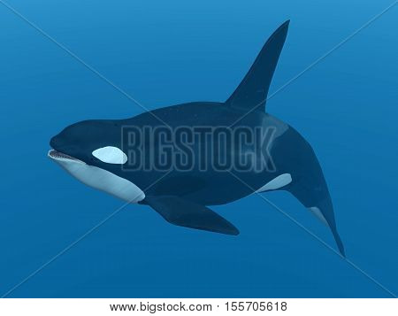 Computer generated 3D illustration with a killer whale
