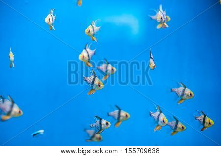 A Flock Of Small Beautiful Fish
