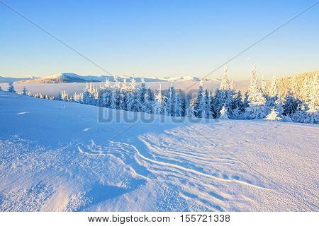 Survival in mountain on frosty day mesmerizing white tree and white flatland aroundhot breath warming chilling tourist hand