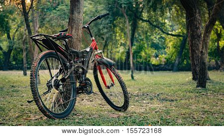 Red and black mountain bicycle standing in park, in morning .