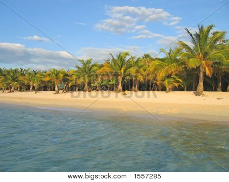 Tropical Caraibe Beach With Palm Tree And White Sand, Roatan Island, Honduras