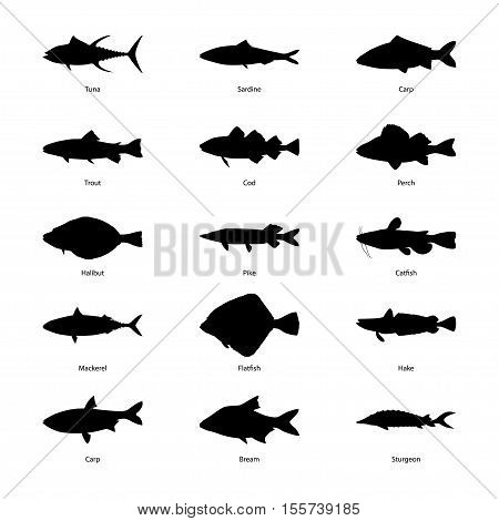 Set of silhouettes of fishes, vector illustration