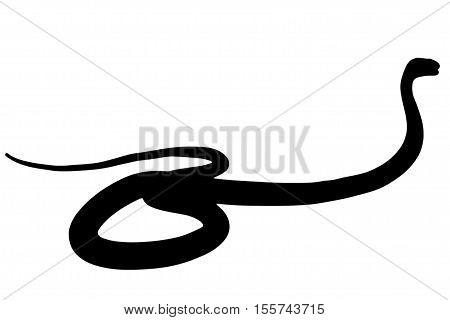 Illustration of black backlight King Cobra silhouette isolated on white background, with copy space.