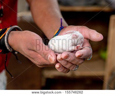 Newborn rabbit child held in hands of a man