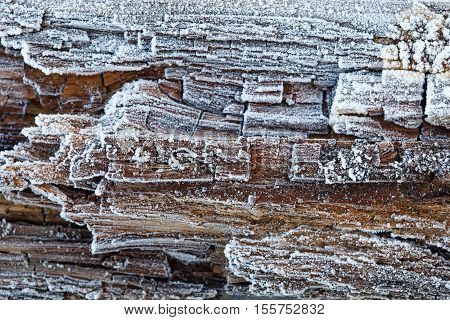Rime on rotten wood, background old frozen woods