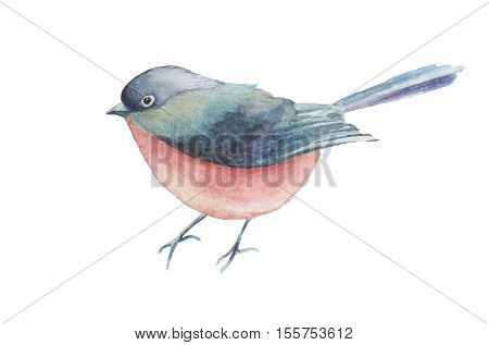 Watercolor bird hand drawn illustration isolated on white background.