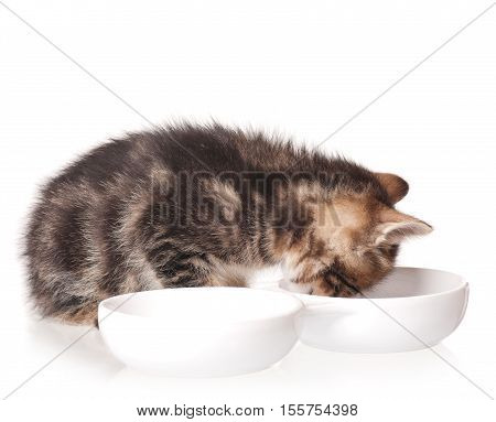 Cute little kitten with bowl for a forage over white background