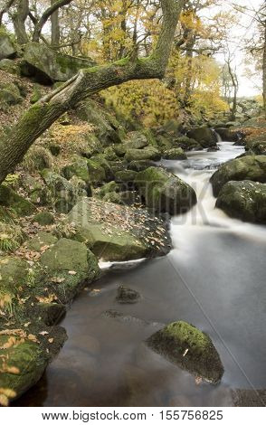 Burbage Brook flows down the forested rocky river valley of Padley Gorge Longshaw Estate Peak District Derbyshire UK
