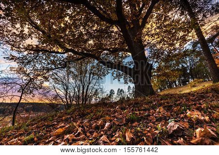 Sunburst clouds and tree with colored leaves in autumn. Moravian landscape Lysice.