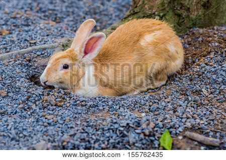 small rabbit in my farm, lovely pet