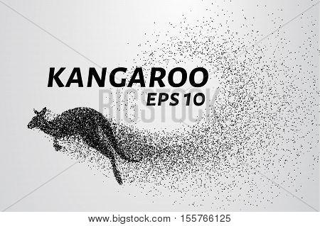 Kangaroo of particles. Kangaroo consists of small circles and dots.