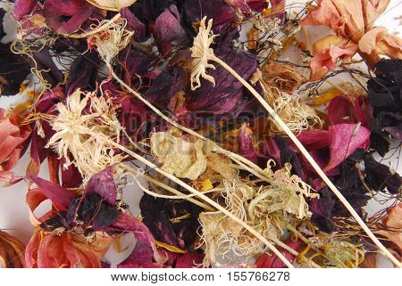 close up of the dried flower background