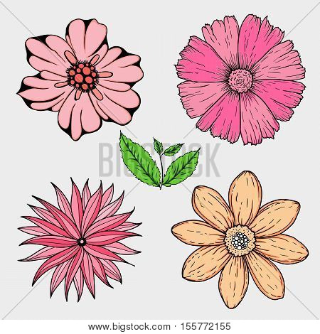 Vector set of hand drawn colorful flowers and leaf branch. illustration isolated on grey. Magic beautiful camomiles. Hand sketched doodle for coloring books, your design, web, package