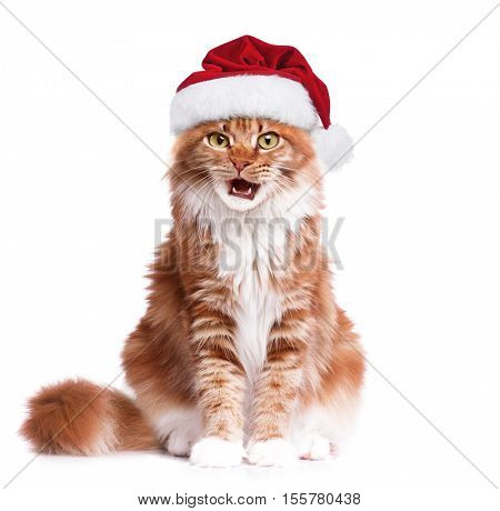 Portrait of Maine Coon kitten in red Christmas Santa hat. Cute orange striped cat dressed as Santa Claus looking at camera. Christmas red kitty make funny face isolated on white background.