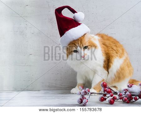 Little santa helper - red cat in christmas santa hat