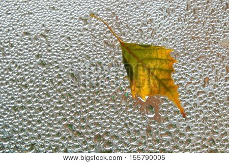 loseup of the autumn leaf on dropped window