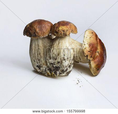 Three mushrooms (Boletus edulis) - Porcini King bolete penny buncep