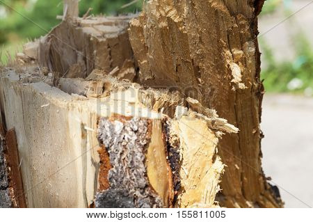 broken tree trunk during stormy weather, made's photos close-up