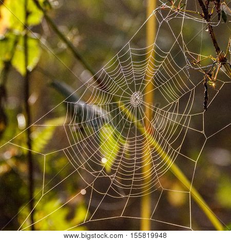 Autumn morning and the spider's web on the plants. Shallow depth of field.