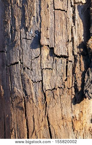 photographed close-up of old cracked wooden surface, seen a lot of faults. Small depth of field