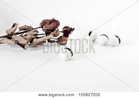 The White Badminton Shuttlecock With Dried Rose Flower Isolated On White Background