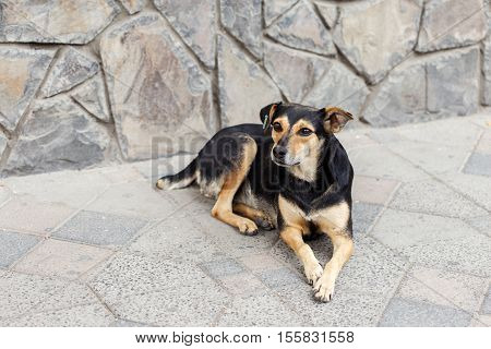 Portrait of sad homeless dog on outdoors close up