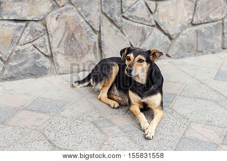 Portrait of sad homeless dog on outdoors close up