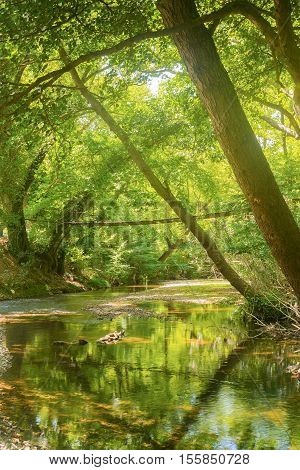 Beautiful reflection of trees and bridge of forest prokopi in Euboea in Greece.
