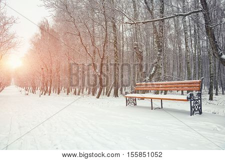 Park bench and trees covered by heavy snow. Lots of snow. Sunset