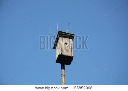 Nesting box on the tree in the spring, Russia