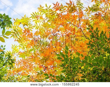 Abstract vivid color leaves on tree patterns for autumn background