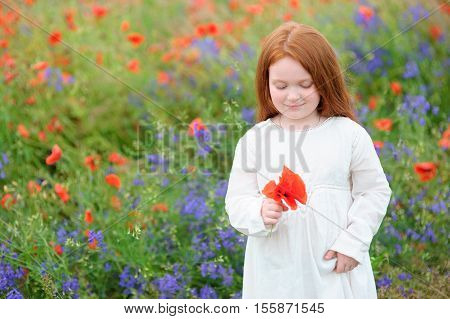Young girl picking red poppies in a meadow in a pretty frock in summer day