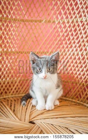 very cute kitten on a wicker chair