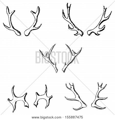 Horn sketch of a deer. Pencil drawing by hand. Vector image
