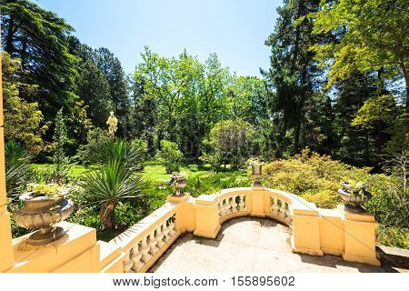 Shady alley in the arboretum of Sochi, Russia, summer day