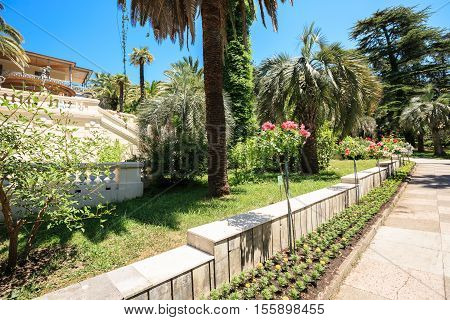 Sochi, Russia - June 08, 2015: Shady alley in the arboretum of Sochi, Russia, summer day