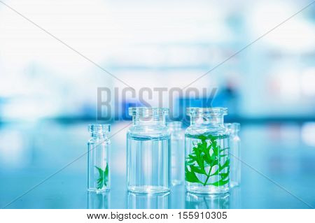 green leaf with water in clear glass vial at lab science background